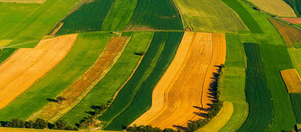 Agricultural Scholarship FMA