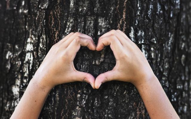 tree-heart-hands