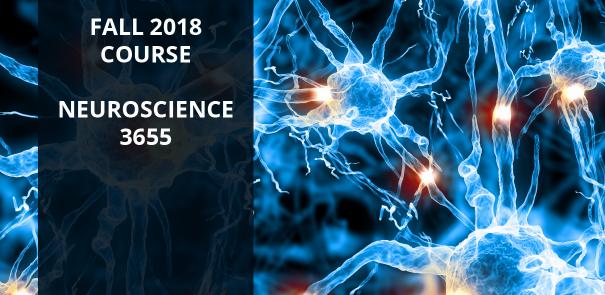 Neuroscience 3655 FMA